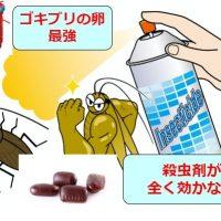 ゴキブリの卵は強い